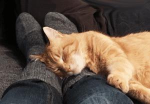 Katze liegt auf breiten Füßen, dicke Socken